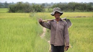 Cambodian_rice_farmer_10678769516